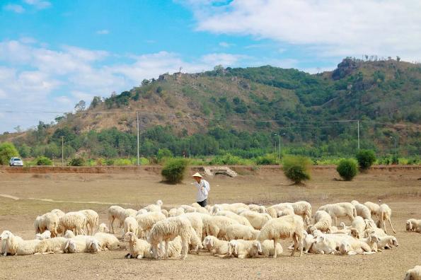 """Đồng cừu Suối Nghệ Châu Đức, Vũng Tàu - điểm """"sống ảo"""" cực chất"""