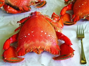 Đến Nha Trang thưởng thức món ăn quý tộc  - Cua Huỳnh Đế