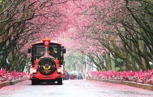 Những điểm đến ngắm hoa anh đào đẹp nhất châu Á