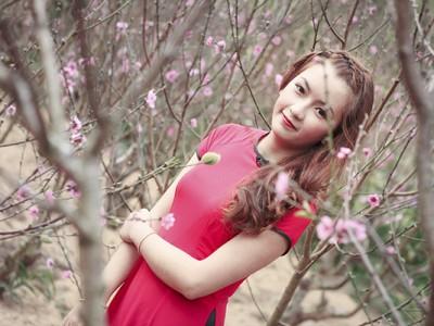 Hoa Mai Anh Đào bất ngờ nở rực hồng phố...