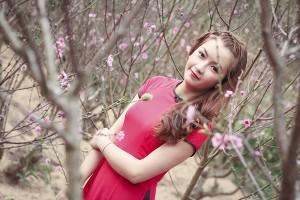 Hoa Mai Anh Đào bất ngờ nở rực hồng phố núi Đà Lạt