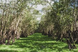 Vẻ đẹp rừng tràm Trà Sư với thời khắc giao mùa