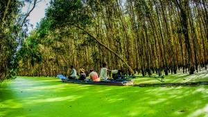 Video rừng tràm Trà Sư An Giang