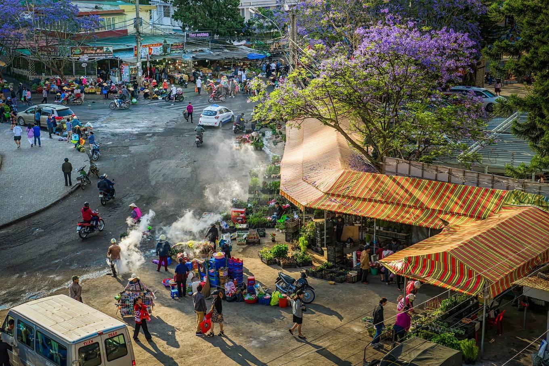 Phượng tím nở rộ trên đường phố Đà Lạt