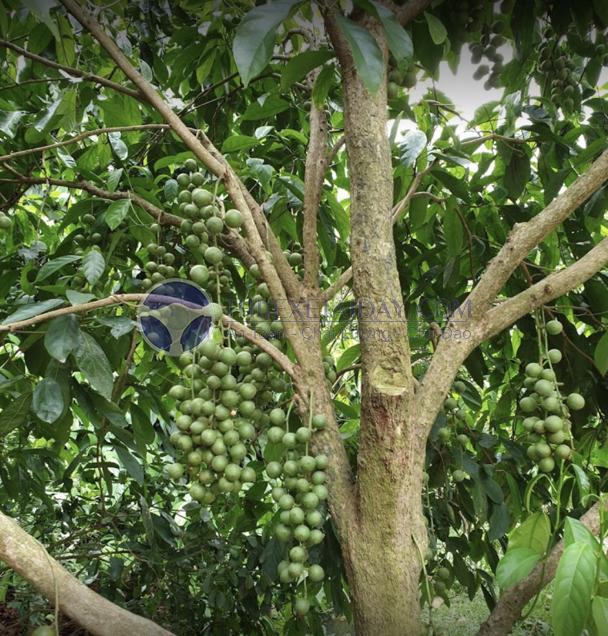 Vườn trái cây Cần Thơ
